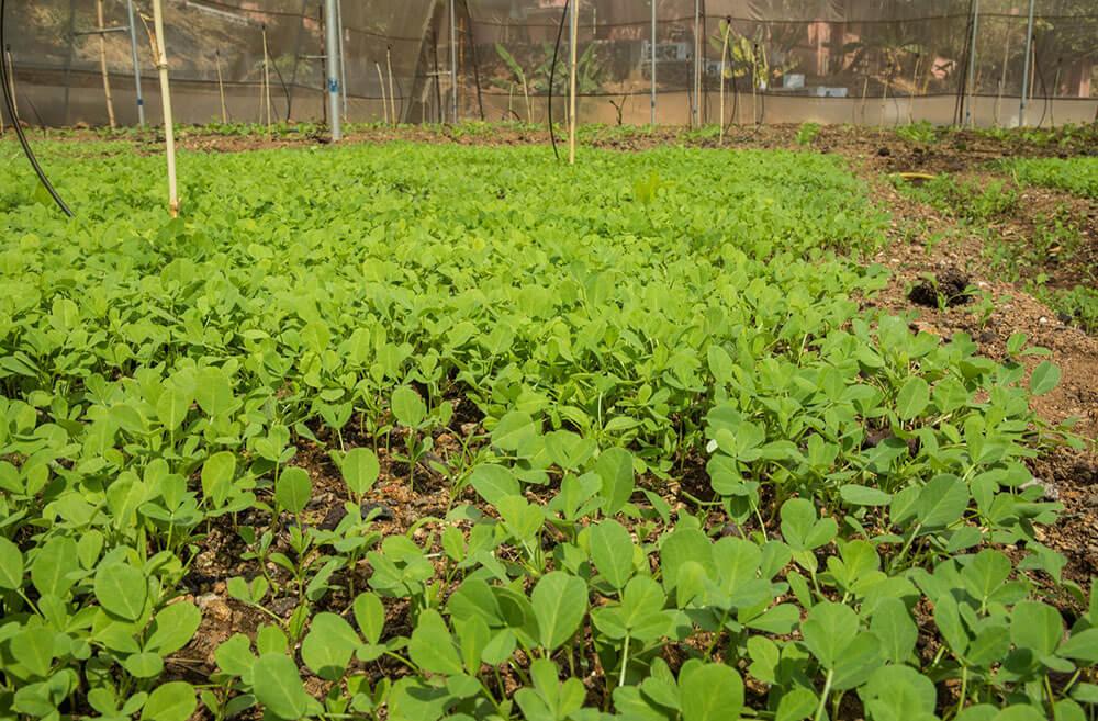Organic Garden 1